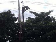 PHCN official electrocuted