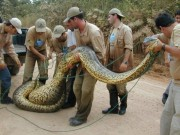 Snake that kills many finally killed