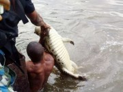 Navy kill big aligator in Lagos
